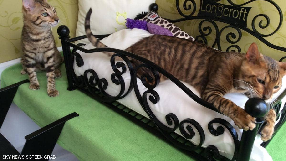 فنادق للقطط